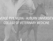 Verge Pipe Media | College of Veterinary Medicine