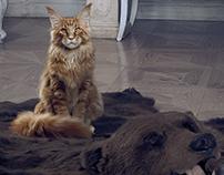 Pet Garden | Bol Proteinli Kedi Mamaları