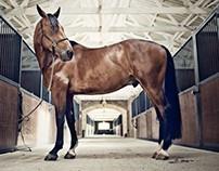 Portraits of horses