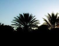 Trip in desert