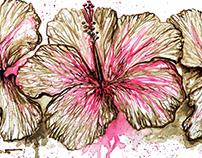 FLOWERS & NATURE. Flores e Natureza
