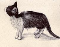 Dibujos - Drawings - Disegni
