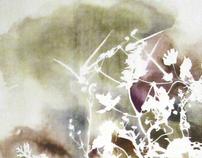 wildflowers - Esther yaloz