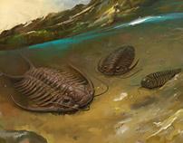 Trilobites in natural environment
