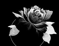 Billie Holiday Album