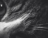 Cats // grey