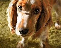Dogs - Cocker Spaniel