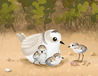Shorebirds Conservation Video