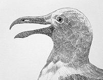 Seagull (2013)