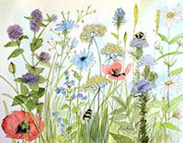 Botanical Print Wildflower