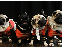 Sleepy Hollow promo costume for pugs
