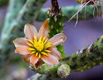 Desert Botanical Garden Photographs