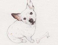 Drawings 2015 // Pet Portraits
