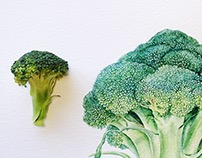 Vegetables illustrations