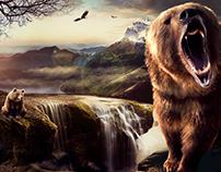 Bear Retouch