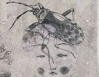 Arocatus Melanocephalus _ Subway Letteratura