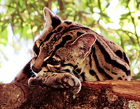 Costa Rican Fauna