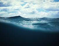 William Winram - Shark Week