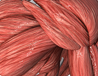 Medical_Animation: Human_Muscles