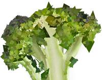 broccoli / hopetoun