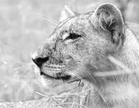 B&W    Wildlife in Botswana