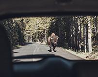 Cinematic Montana