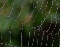 Photo Series: Nature / Case 35: Spider Web