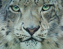 Snow Leopard - 2018