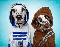 R2 DAL2 & DALBACCA