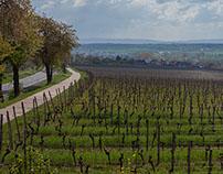 Weinregion Franken
