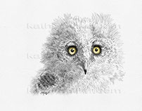 Great Horned Owlet - Kathie Miller