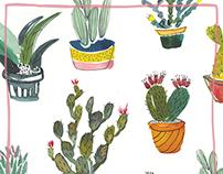 Ecoline Cactus