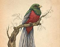 PPS Rare Bird