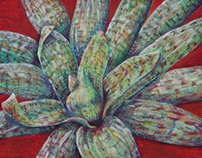 Agave Series