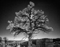 In a Different Light: The Colorado Plateau in Infrared