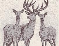 Deers in the woods