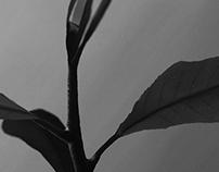 Lemon Tree - Digital Painting