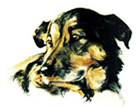 Dog illustration animal chien