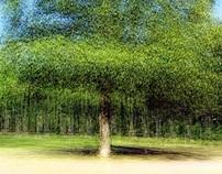 Rotated Trees