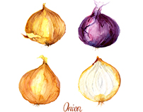 Watercolor illustrations of onion
