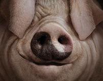 CARGILL Tao Pig
