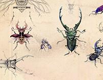 Anatomy of a Beetle
