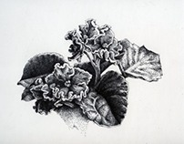 Botanical Illustration: African Violet