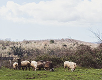 Trashumance of the Sheep in Canale Monterano