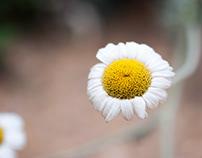 Composite Flowers