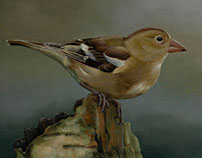 Birdy No.1