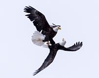 Eagle's Dance