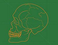 Skull Cross-Section