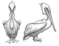 Pelican process