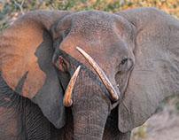 Kruger National Park 2016